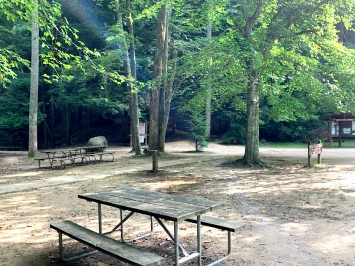 Several picnic tables set among the trees and a dirt ground