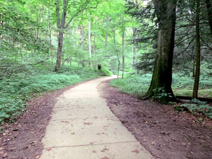 Concrete paved trail surrounded by forest on both sides