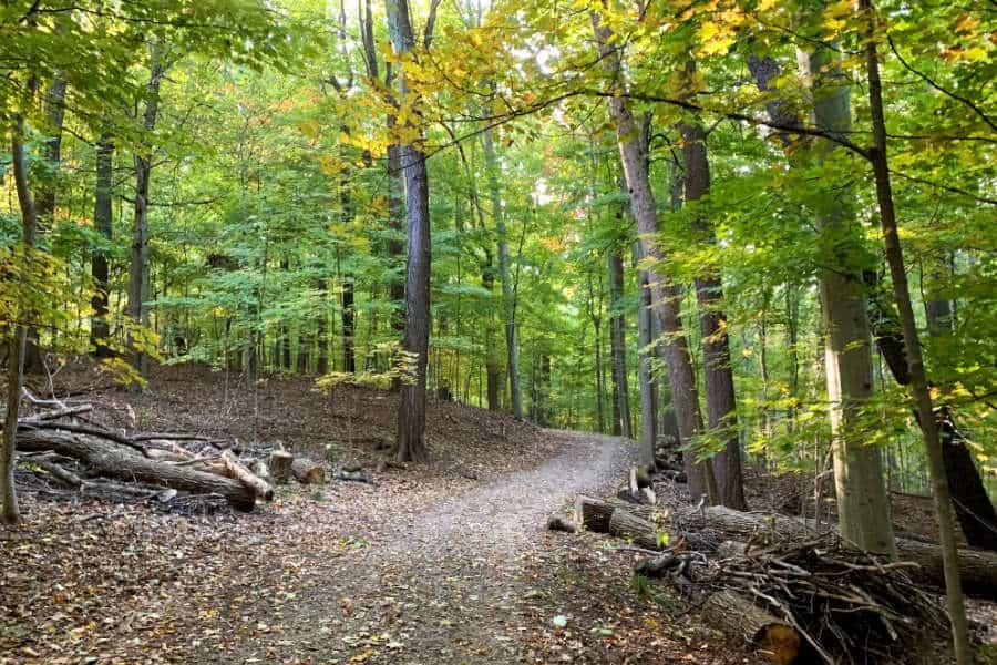 Walking trail through a park