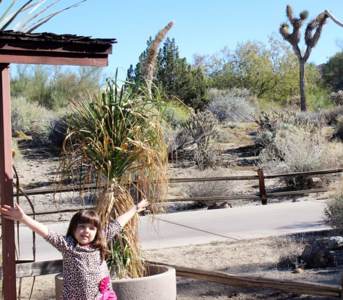 Little girl with arms up in front of the natural wilderness of the The Living Desert