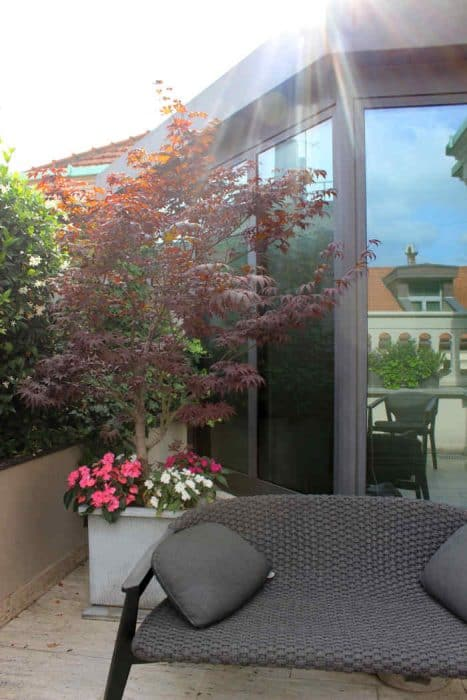 Terrace with couch and potted tree with pink and white flower at the base