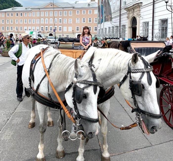 Two white horses getting ready to pull a carriage with a young girl in it.