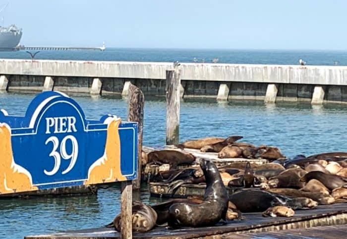 Blue and white sign reading Pier 30 with a bunch of black and tan seals laying on a pier in the water
